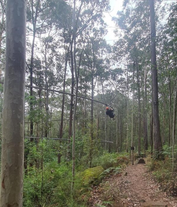 Zip-lining for young adults with mild disabilities